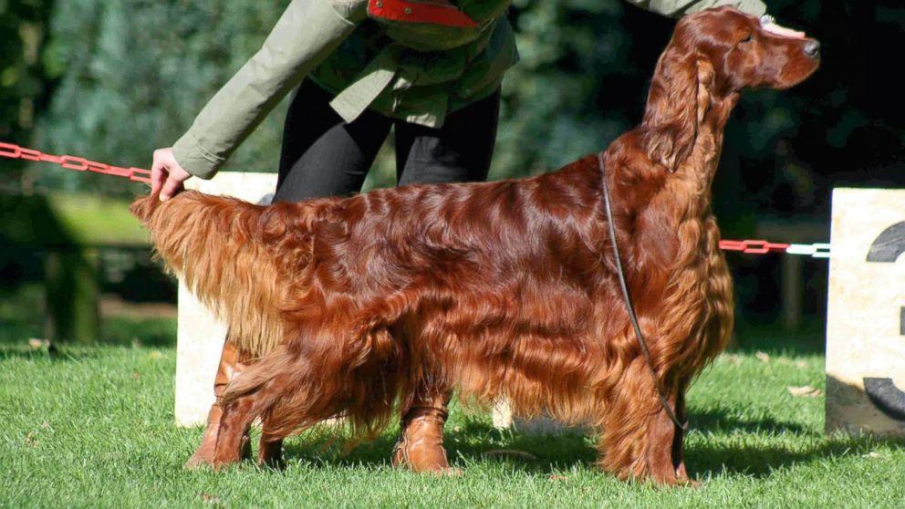 Watch Online National Dog Show