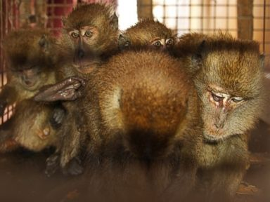 Ship's Crew Not Monkeying Around With These Stowaways