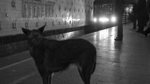 STRAY DOGS MASTER COMPLEX MOSCOW SUBWAY SYSTEM