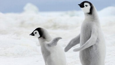 The Extraordinary and Adorable Antics of Penguins