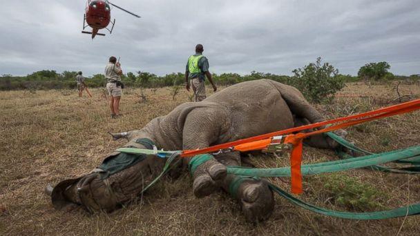 ht rhino kab 1a 140606 16x9 608 Its a Bird! Its a Plane!.... Its a Rhino