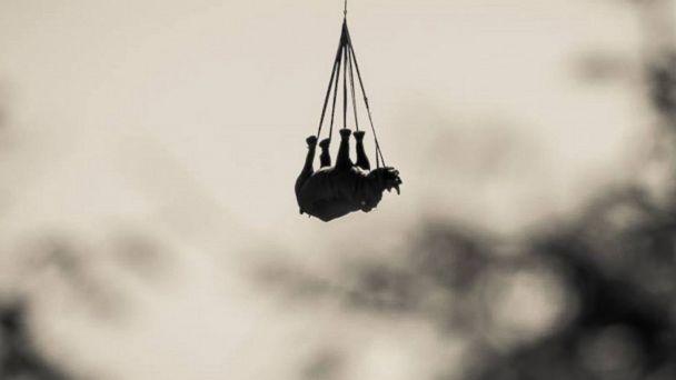 ht rhino kab 2a 140606 16x9 608 Its a Bird! Its a Plane!.... Its a Rhino
