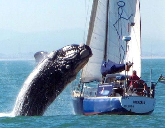 talk about a close call a whale leapt out of the water and crash