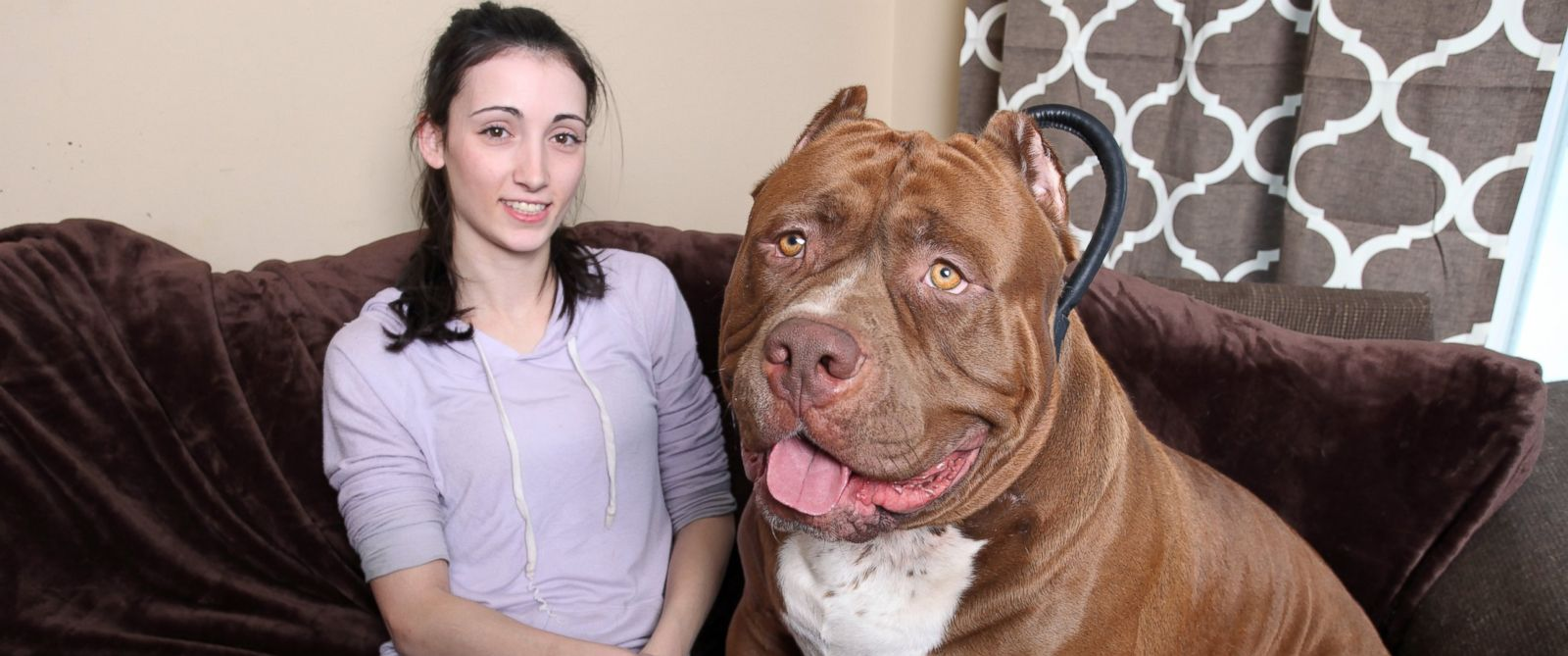 PHOTO: Hulk the pit bull with owner Lisa Grennan at the Dark Dynasty K9s facility on Feb. 22, 2015 in New Hampshire.