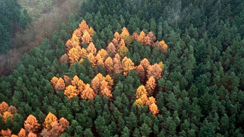 PHOTO: Trees form swastika in German forest