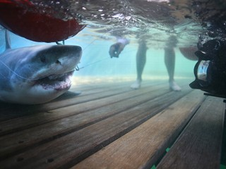 Shark Men Ire After Famous Bodyboarder Killed By Great White