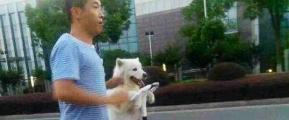 PHOTO: The white fluffy dog was seen standing on its hind legs on a Segway and resting its paws on the wheel.