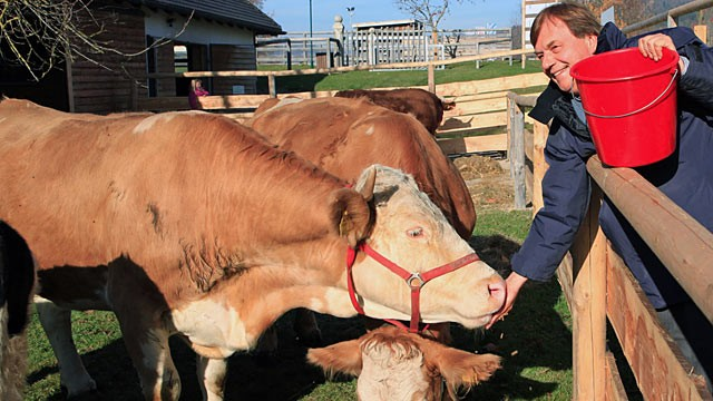 PHOTO: Founder of Aiderbichl farm, Michael Aufhauser, feeds cow Yvonne during her first run in Deggendorf, Germany, Nov. 13 2011.