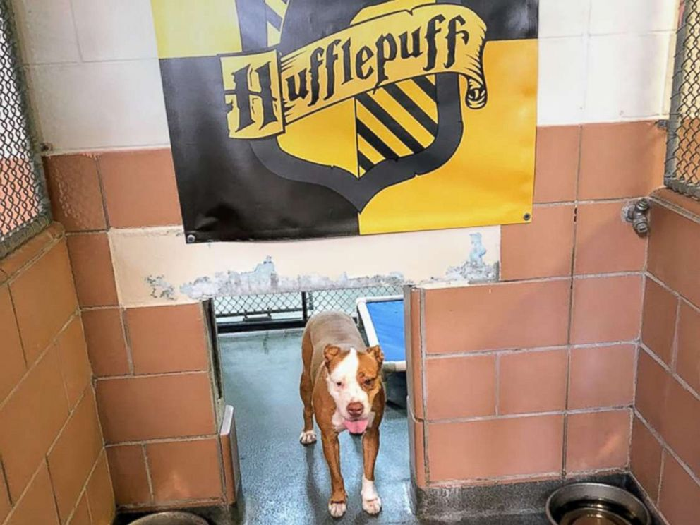 PHOTO: A dog in the Hufflepuff house is photographed at the Pet Alliance of Greater Orlando.