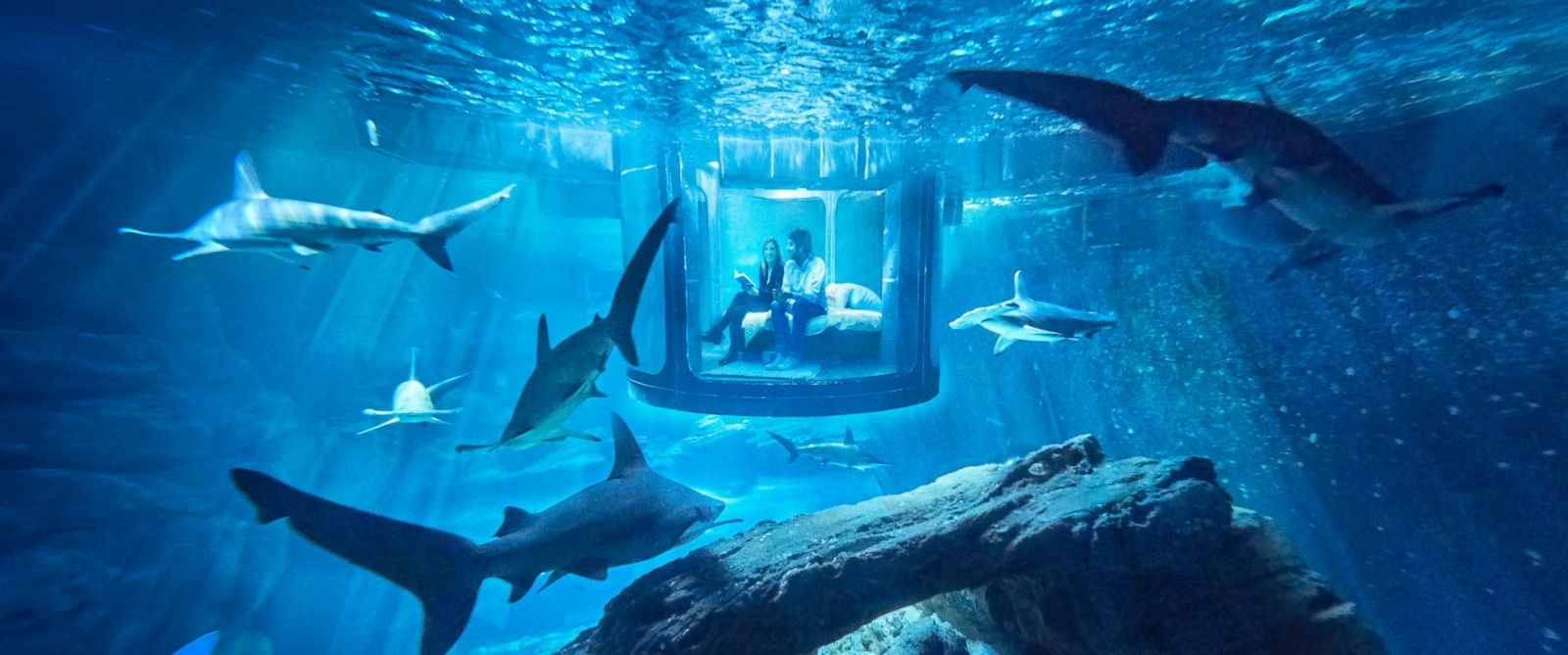 Fish aquarium in bedroom - Photo Shark Tank Airbnb Bedroom Lets You Sleep With The Fishes Literally