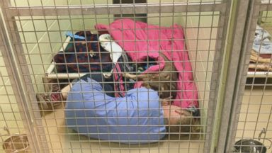 VIDEO: Prissy, an abandoned dog from Tennessee was rescued by the Conway Area Humane Society in New Hampshire. After the dog had surgery to be spayed, shelter worker Chrissy Ireland climbed into her cage to cuddle and comfort her.