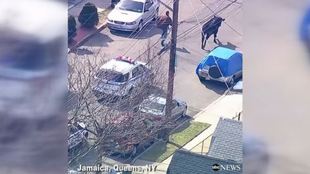 Police chased a runaway bull who was milking his 15 seconds of fame in Jamaica, Queens, New York.