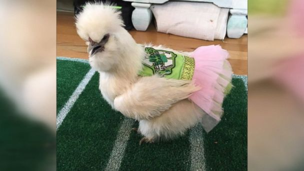 Erika Proctor's 7-year-old son Finn adopted Darla, a therapy chicken in Virginia.