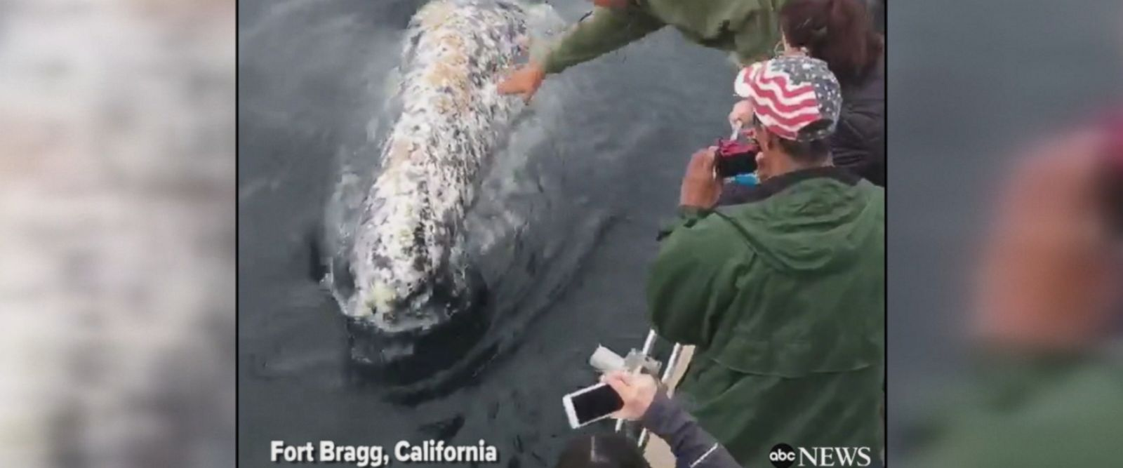 Playful whale delights tourists on a charter boat in Fort Bragg, California by blowing water from his blowhole.