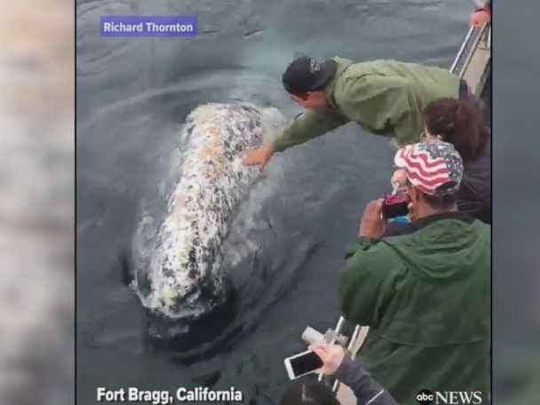 WATCH:  Friendly whales entertain tourists on a boat off California
