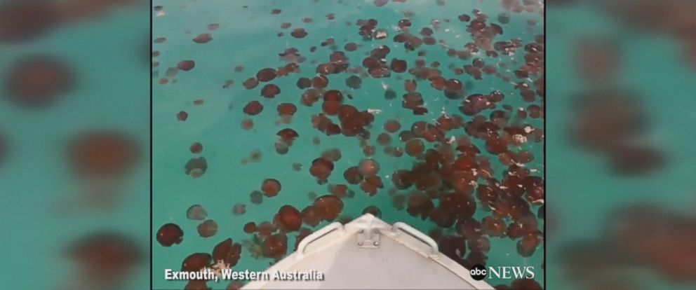 A pair of Australian surfers went through a gigantic swarm of red jellyfish on Saturday.