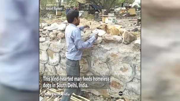 Kind-hearted man feeds homeless dogs around New Delhi with charity organization that aims to feed stray dogs in the city.