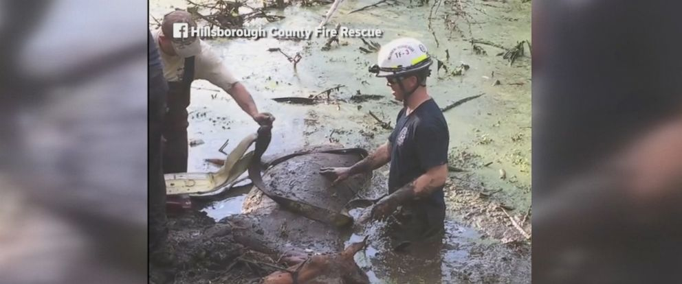 Rescue crews rescued a trapped horse in Plant City, Florida, on Monday.