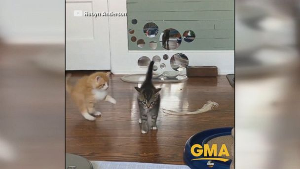 These adorable kittens will surely brighten your day.