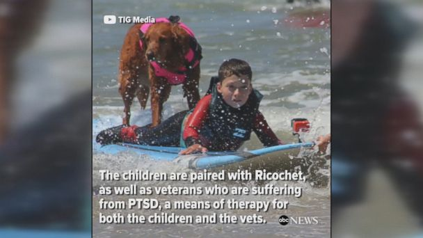 Dog helps children with disabilities and veterans with PTSD learn to surf as a means of therapy.