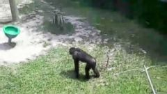 A bonobo threw a portion of a cement block towards a family visiting the Jacksonville Zoo in Florida on Monday, according to zoo officials.