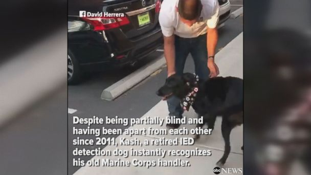 Retired IED detection dog instantly recognizes his old Marine Corps handler, despite being partially blind and not having seen him since serving in Afghanistan in 2011.