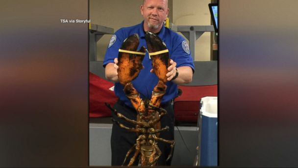 VIDEO: The crustacean was alive when a TSA screener agent at Boston Logan International Airport discovered it on Sunday.