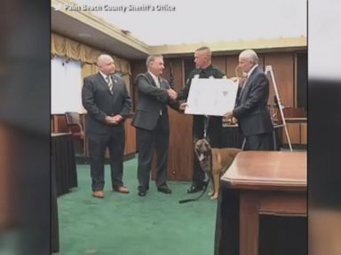 WATCH:  K-9 honored with Purple Heart for protecting partner