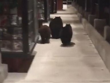 WATCH:  3 not-so-little bears take off outside a Taco Bell