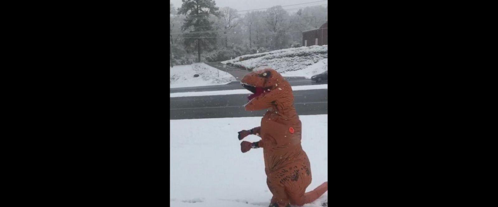 VIDEO: T-Rex enjoys first day of snow