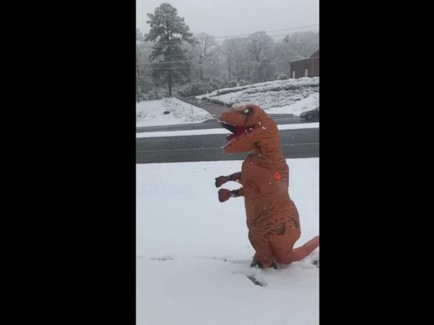 WATCH:  T. rex enjoys 1st day of snow