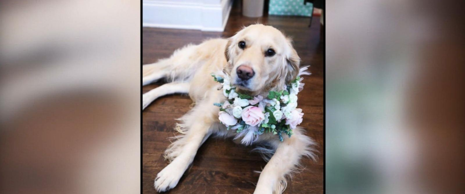 VIDEO: Bride uses her dog as flower girl: 'She's my little shadow'