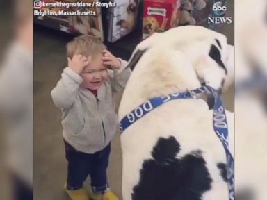 WATCH:  Great Dane, toddler make for great friends