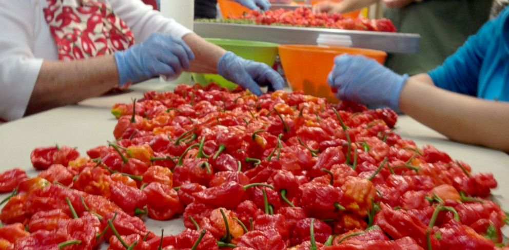 """PHOTO: """"Carolina Reapers"""" are a crossbreed made by farmer Ed Currie at The Puckerbutt Pepper Company in Rock Hill, South Carolina. These peppers are said to be more than 100 times hotter than a jalapeno."""