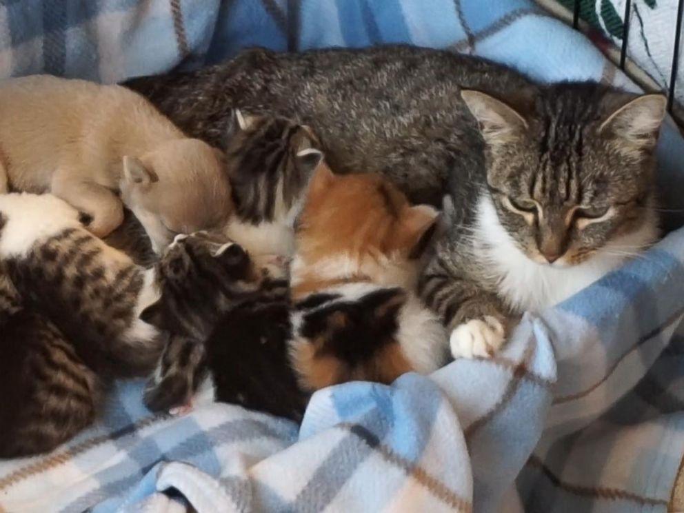 Father Cats Newborn Kittens