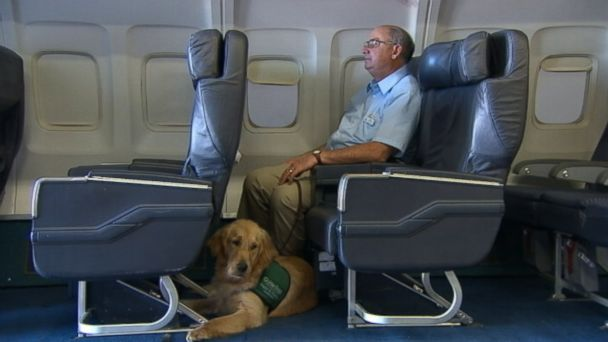 ABC dog flight nt 131022 16x9 608 Class Helps Dogs Navigate Air Travel With a Bit More Ease