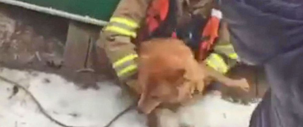 PHOTO: A Fairfax County rescue crew rescued a dog named Angel from an icy lake in Reston, Virginia, Feb. 17, 2015.