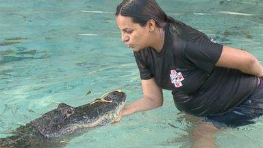 PHOTO: Even at seven months pregnant, Martha Rivera has no fear when it comes to getting in the water with alligators.
