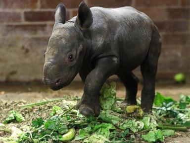 PHOTO: Baby Rhino Debuts at Czech Republic Zoo