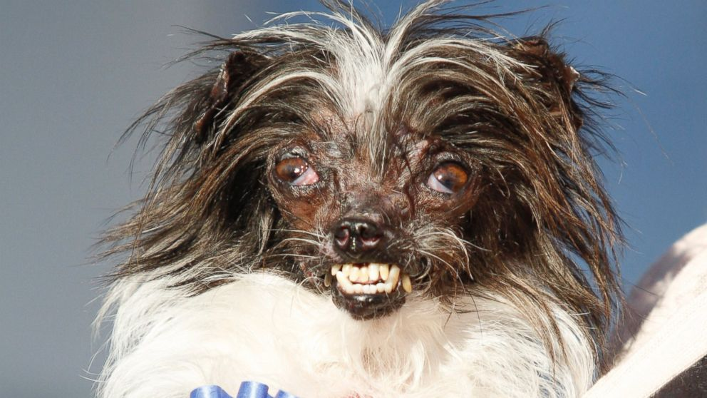 World S Ugliest Dogs Pictures