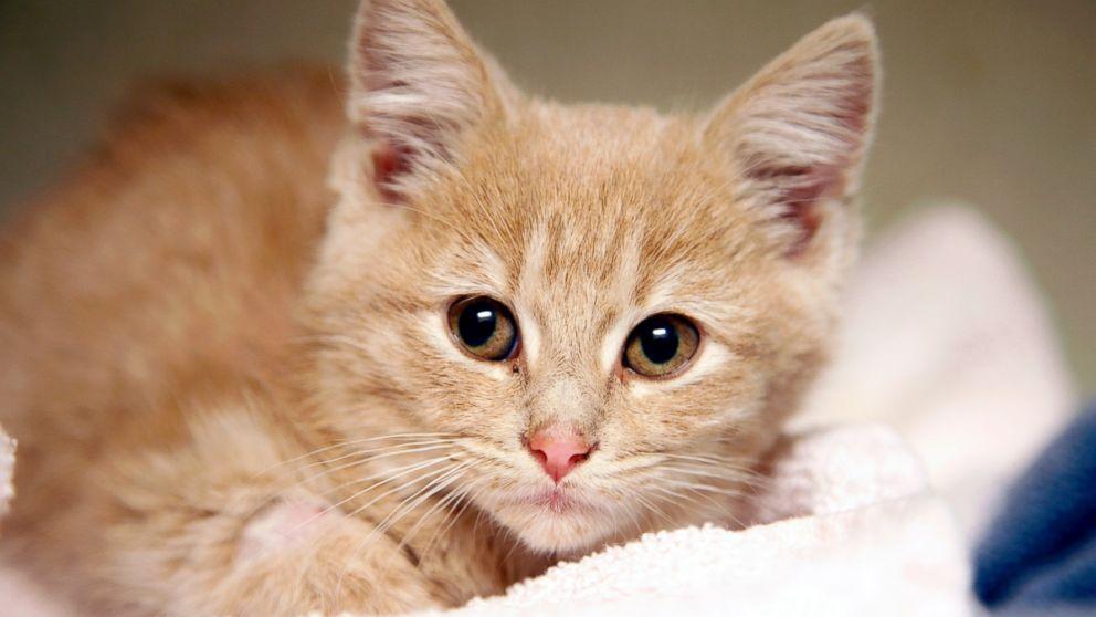 PHOTO Elsa the kitten Kitten