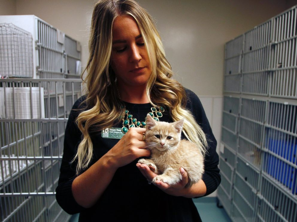 PHOTO: Shelter spokeswoman Megan Rees holds Elsa the kitten as she recovers at the Denver Dumb Friends League animal shelter, Nov. 14, 2014, in Denver.