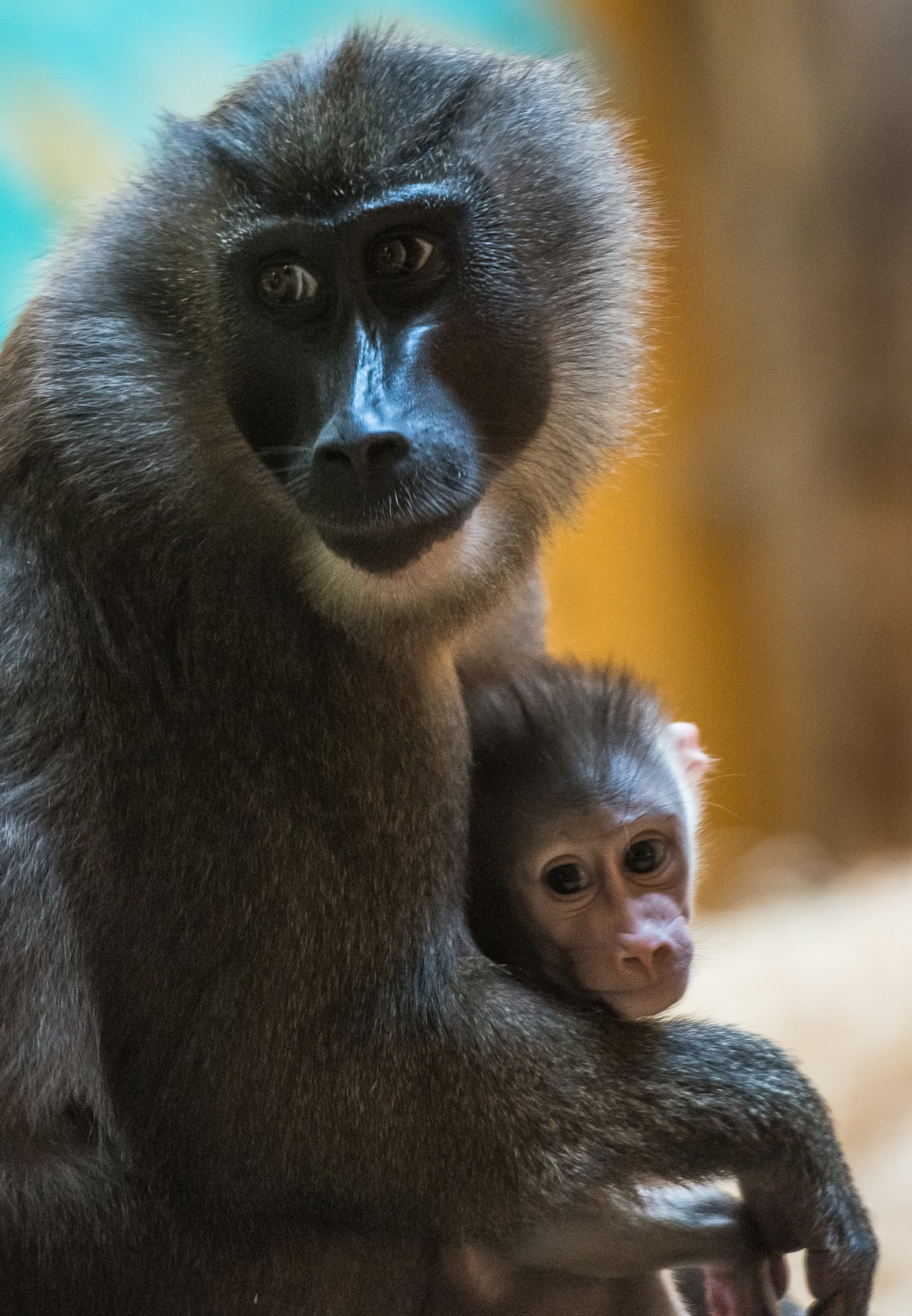 Mother and Baby Chill Out at the Animal Park