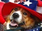 PHOTO: Patriotic Pets Dress With July 4 Pride