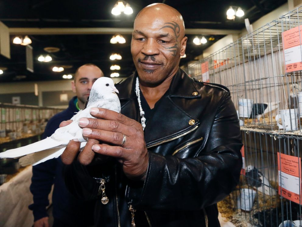 PHOTO: Former boxing champion Mike Tyson holds a white homing pigeon at the National Pigeon Associations 93rd annual Grand National Pigeon Show in Ontario, Calif., Feb. 2, 2015.