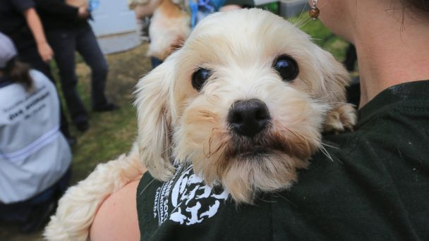 AP puppy mill quebec 02 jtm 140724 16x9 608 Heartwarming Photos Document a Puppy Mill Rescue