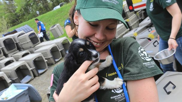 AP puppy mill quebec 05 jtm 140724 16x9 608 Heartwarming Photos Document a Puppy Mill Rescue
