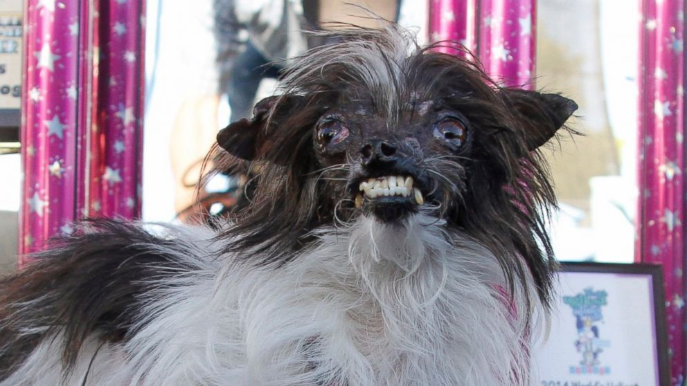 World's Ugliest Dogs Photos - ABC News