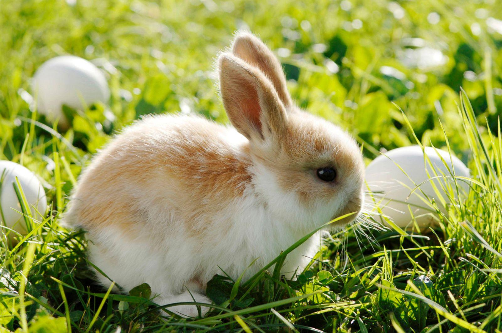 Cutest Easter Bunnies ...