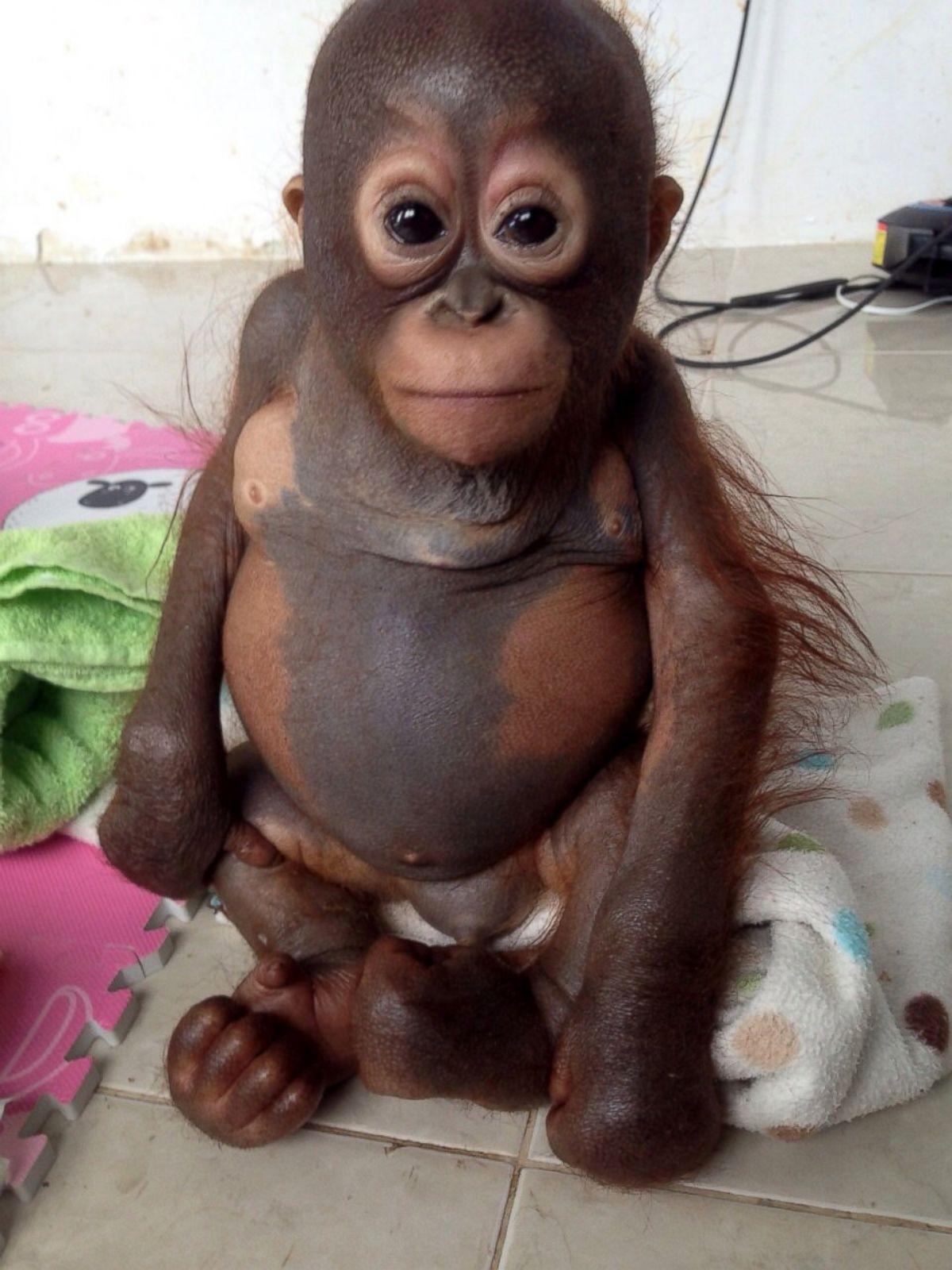 Sex xxx orangutan exposed photos